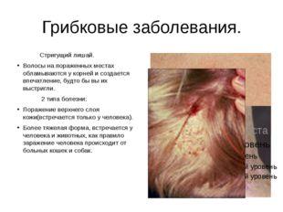 Грибковые заболевания. Стригущий лишай. Волосы на пораженных местах обламываю