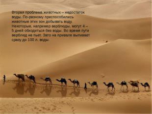 Вторая проблема животных – недостаток воды. По-разному приспособились животны