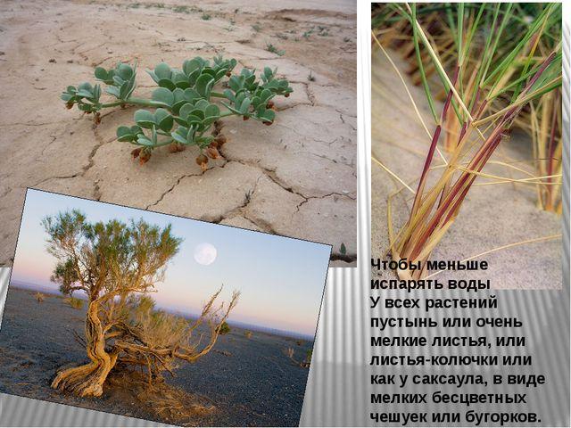 Чтобы меньше испарять воды У всех растений пустынь или очень мелкие листья, и...