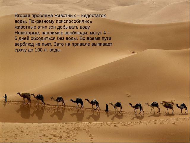 Вторая проблема животных – недостаток воды. По-разному приспособились животны...