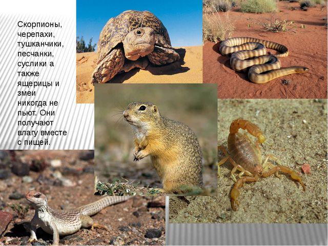 Скорпионы, черепахи, тушканчики, песчанки, суслики а также ящерицы и змеи ник...