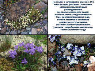На скалах в заповеднике отмечено 194 вида высших растений. Со скалами связана