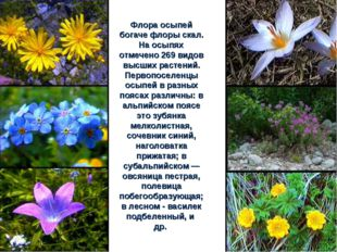 Флора осыпей богаче флоры скал. На осыпях отмечено 269 видов высших растений.