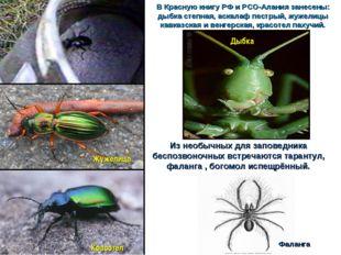 В Красную книгу РФ и РСО-Алания занесены: дыбка степная, аскалаф пестрый, жуж