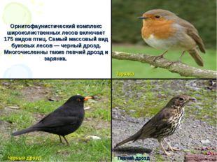 Орнитофаунистический комплекс широколиственных лесов включает 175 видов птиц
