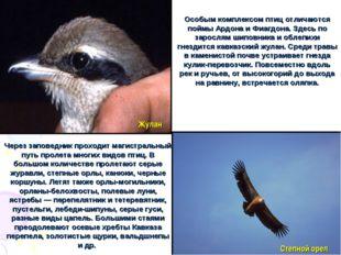 Особым комплексом птиц отличаются поймы Ардона и Фиагдона. Здесь по зарослям
