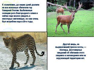 Другой зверь, не выдержавший пресса охоты, — леопард. Достоверных сведений о