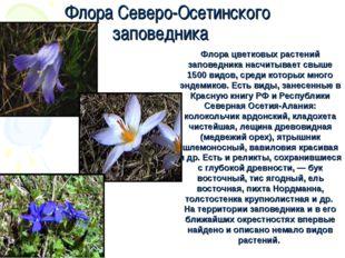 Флора цветковых растений заповедника насчитывает свыше 1500 видов, среди кото