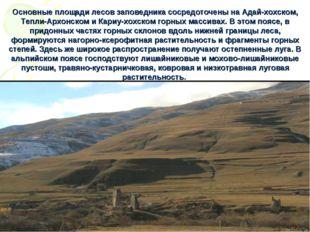 Основные площади лесов заповедника сосредоточены на Адай-хохском, Тепли-Архон