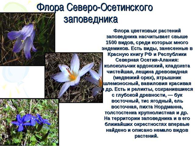 Флора цветковых растений заповедника насчитывает свыше 1500 видов, среди кото...