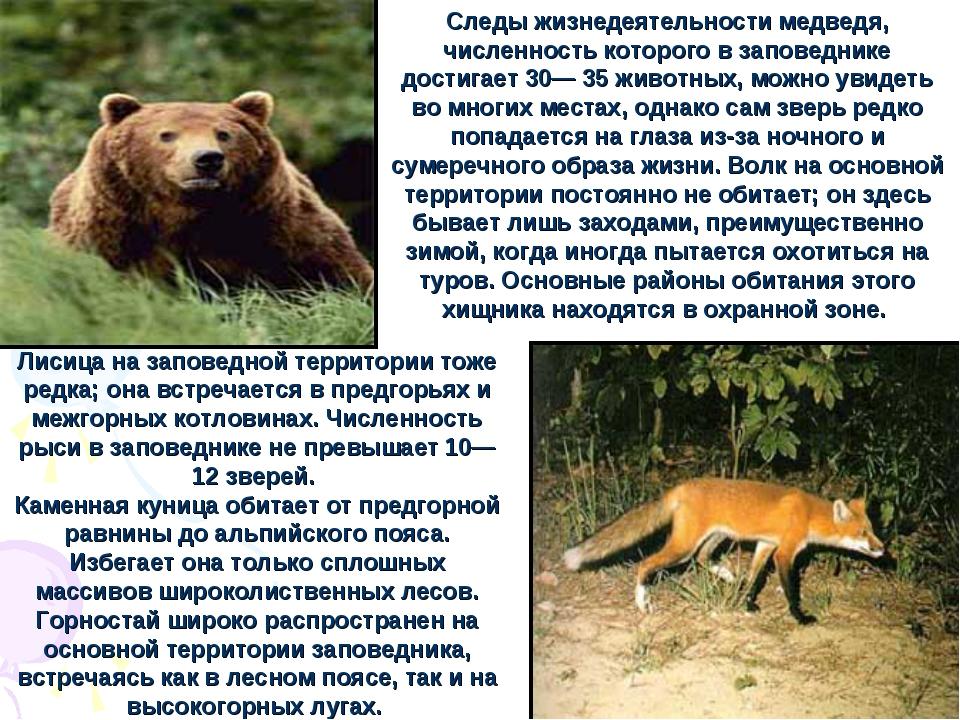 Лисица на заповедной территории тоже редка; она встречается в предгорьях и ме...