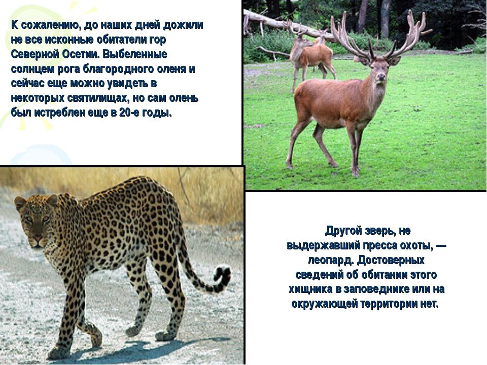 Другой зверь, не выдержавший пресса охоты, — леопард. Достоверных сведений о...