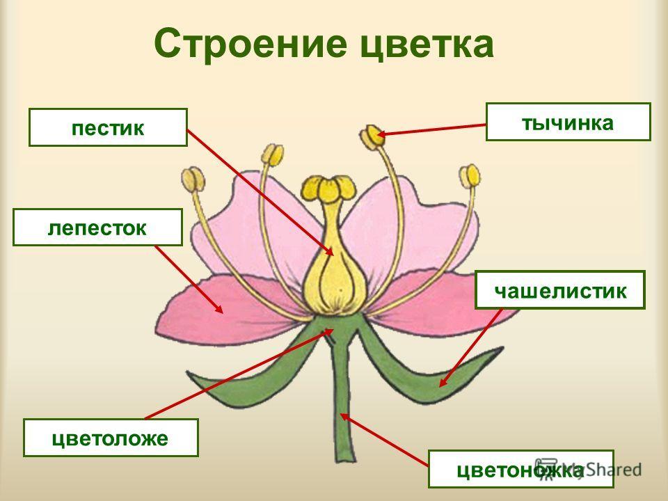http://images.myshared.ru/447185/slide_5.jpg