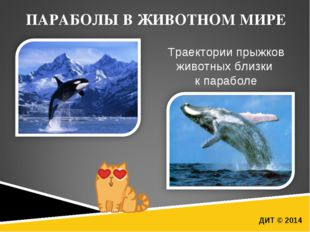 ДИТ © 2014 ПАРАБОЛЫ В ЖИВОТНОМ МИРЕ Траектории прыжков животных близки к пара