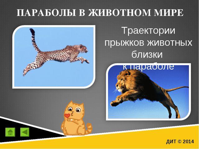 ДИТ © 2014 ПАРАБОЛЫ В ЖИВОТНОМ МИРЕ Траектории прыжков животных близки к пара...