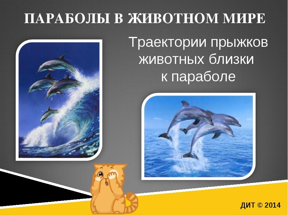ПАРАБОЛЫ В ЖИВОТНОМ МИРЕ ДИТ © 2014 Траектории прыжков животных близки к пара...