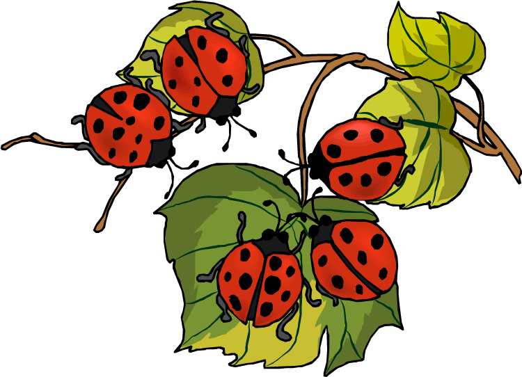 C:\Users\ADMIN\Pictures\ladybird015.png