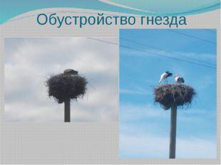 Обустройство гнезда