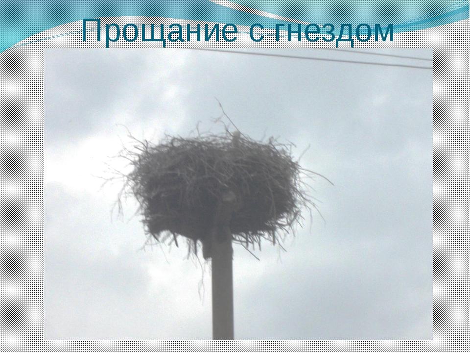 Прощание с гнездом
