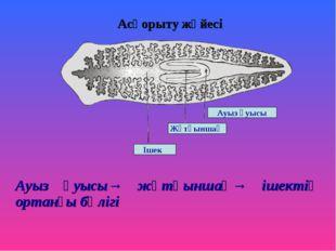 Асқорыту жүйесі Ауыз қуысы→ жұтқыншақ→ ішектің ортанғы бөлігі Ішек Жұтқыншақ