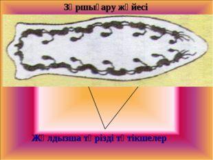 Зәршығару жүйесі Жұлдызша тәрізді түтікшелер
