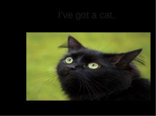I've got a cat.