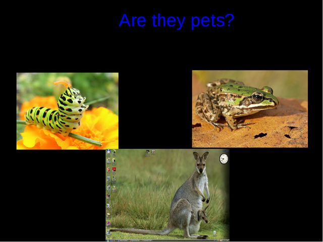 Are they pets?