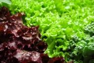 http://i.istockimg.com/file_thumbview_approve/12938029/3/stock-photo-12938029-salad-leaves.jpg