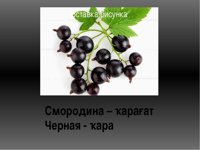 Смородина – ҡарағат Черная - ҡара