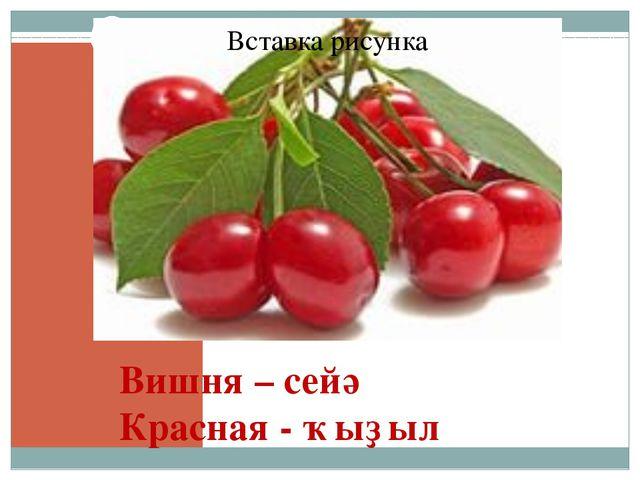 Вишня – сейә Красная - ҡыҙыл