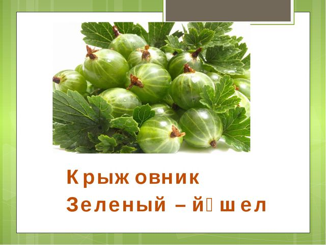 Крыжовник Зеленый – йәшел