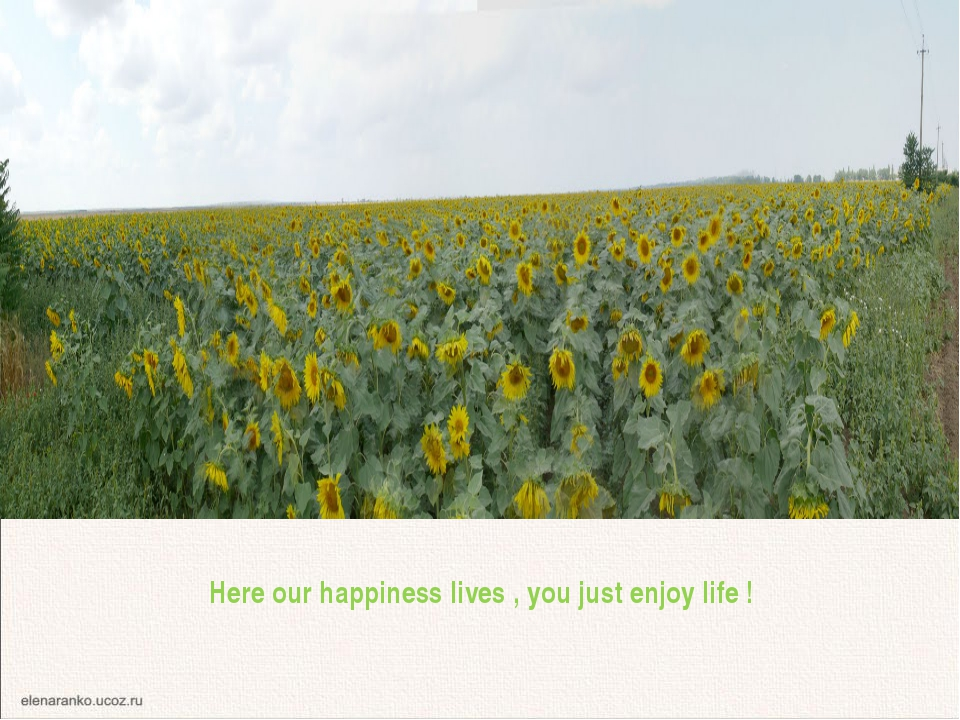 Here our happiness lives , you just enjoy life ! Whether and not from here ne...