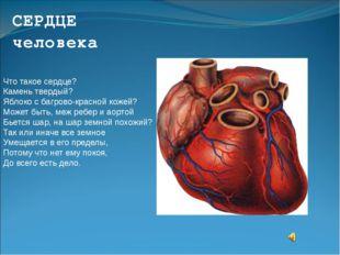 СЕРДЦЕ человека Что такое сердце? Камень твердый? Яблоко с багрово-красной ко