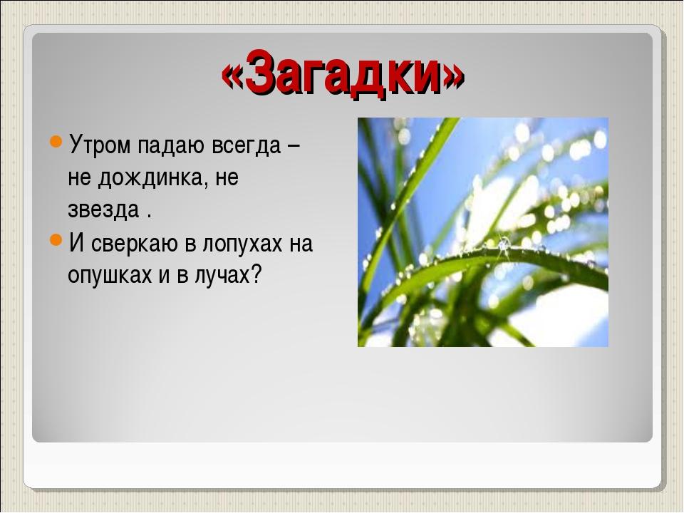 «Загадки» Утром падаю всегда – не дождинка, не звезда . И сверкаю в лопухах н...