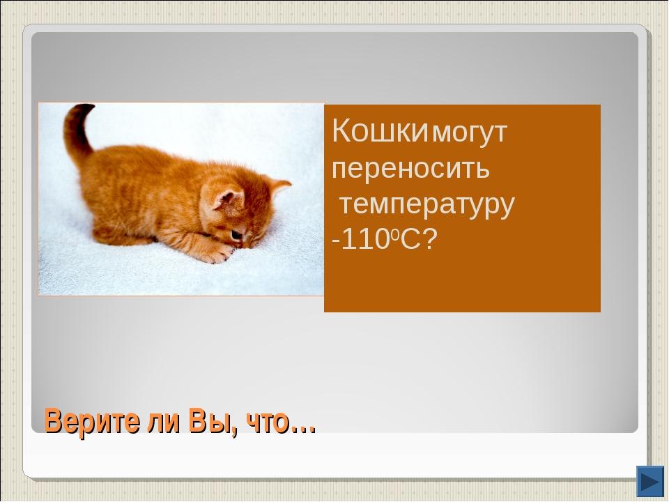 Верите ли Вы, что… Кошки могут переносить температуру -1100С?