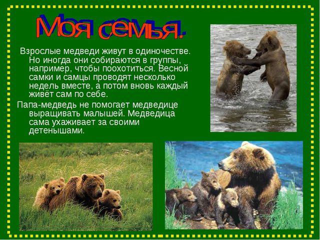 Взрослые медведи живут в одиночестве. Но иногда они собираются в группы, нап...
