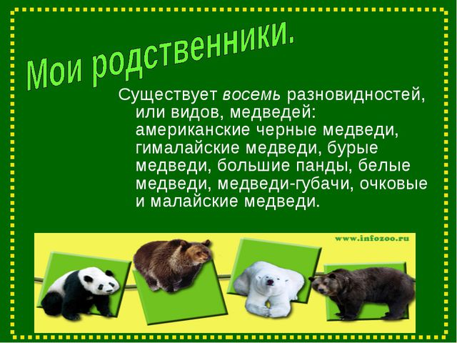 Существует восемь разновидностей, или видов, медведей: американские черные ме...