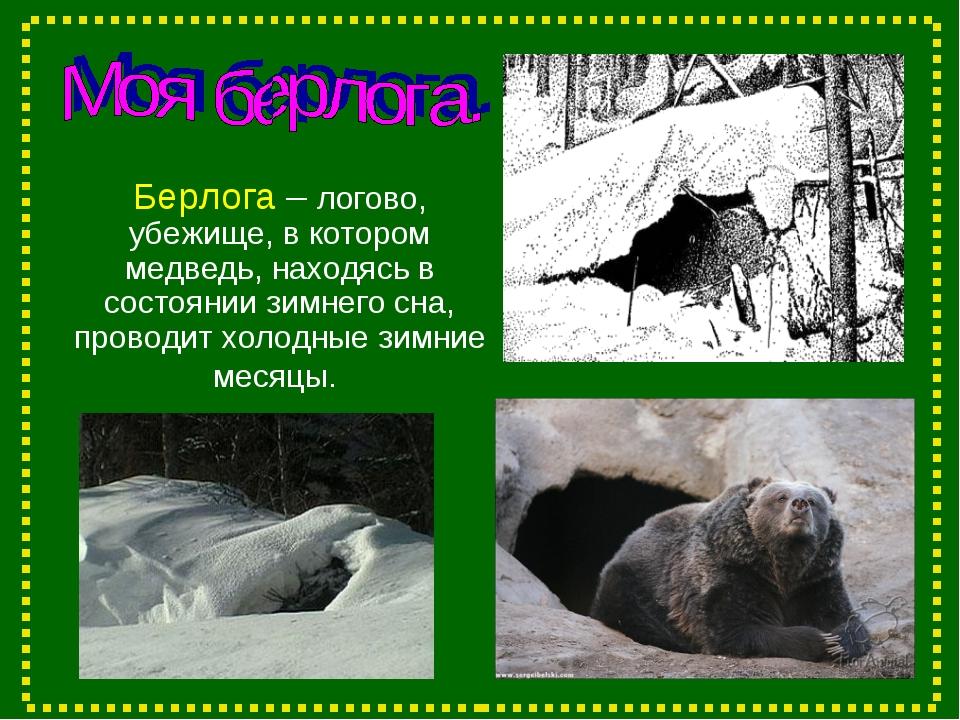 Берлога – логово, убежище, в котором медведь, находясь в состоянии зимнего сн...