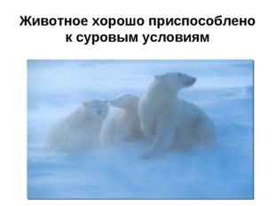 Животное хорошо приспособлено к суровым условиям