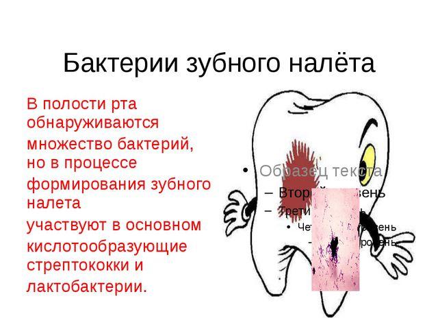 Бактерии зубного налёта В полости рта обнаруживаются множество бактерий, но в...