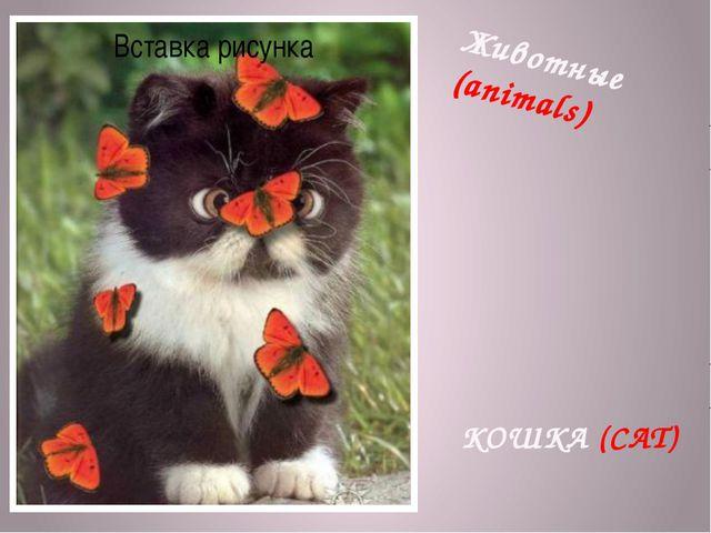 Животные (animals) КОШКА (CAT)