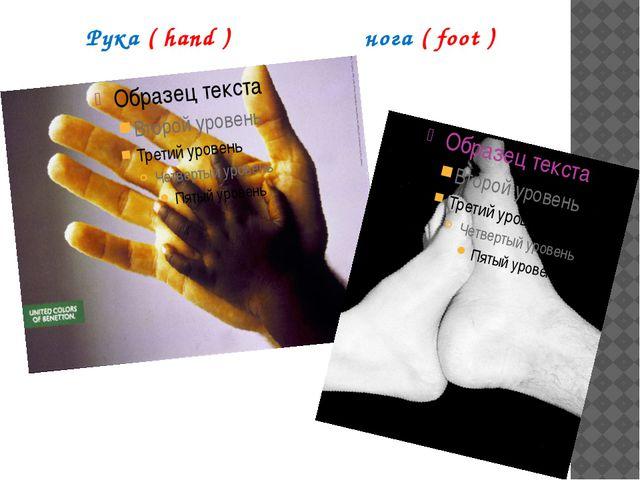 Рука ( hand ) нога ( foot )