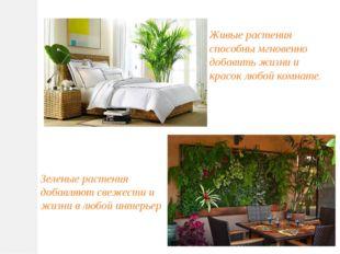 Живые растения способны мгновенно добавить жизни и красок любой комнате. Зеле