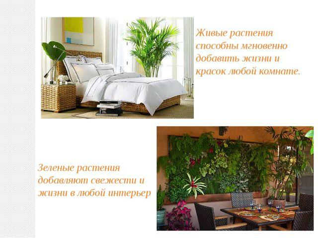 Живые растения способны мгновенно добавить жизни и красок любой комнате. Зеле...