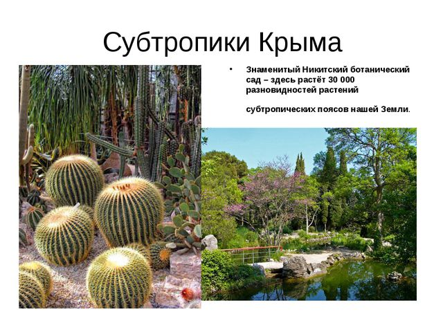 Субтропики Крыма Знаменитый Никитский ботанический сад – здесь растёт 30 000...