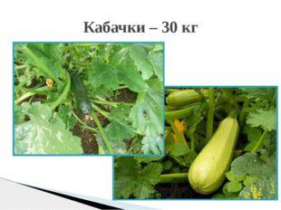 Кабачки – 30 кг