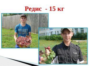 Редис - 15 кг
