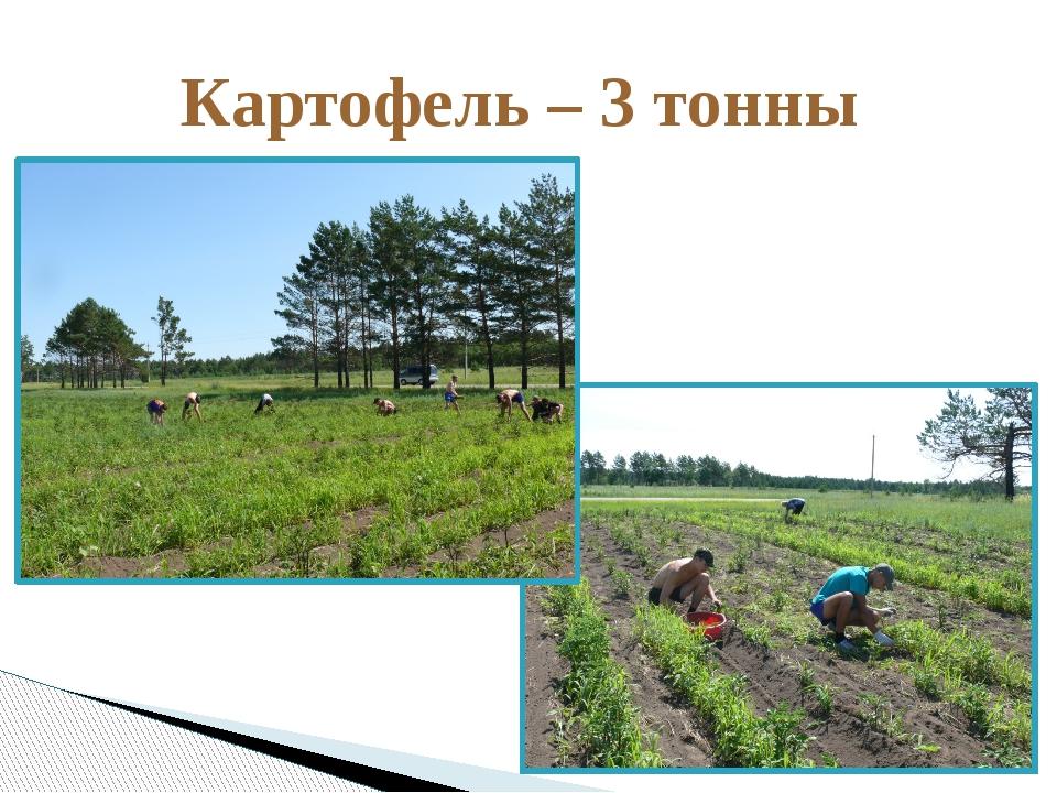 Картофель – 3 тонны