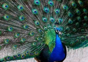 http://kuda-edu.com.ua/images/ukraine/zoopark/zoopark4.jpg