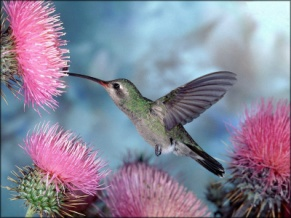 C:\Users\Людмила\Desktop\bird-and-flower.jpg